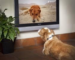Doggy 1